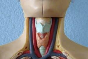 Quel niveau de TSH pour l'hypothyroïdie?