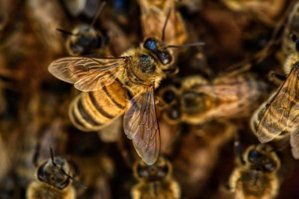 Top 3 des bienfaits du miel bio